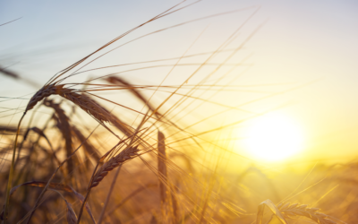 Machine Learning in the Field for More Successful and Eco-Friendly Farming